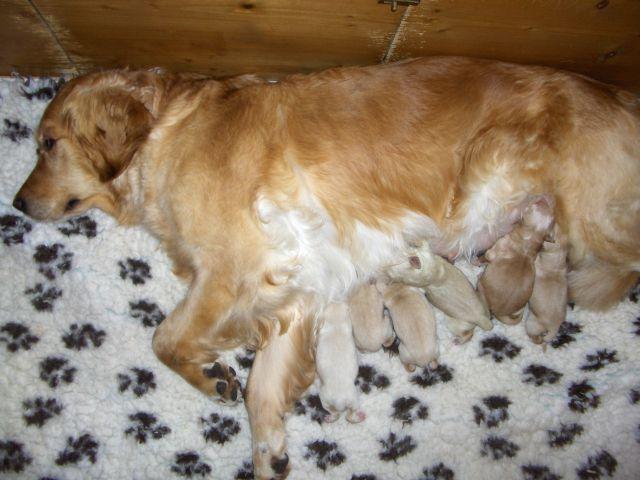 Puppy's Vanity en Bo