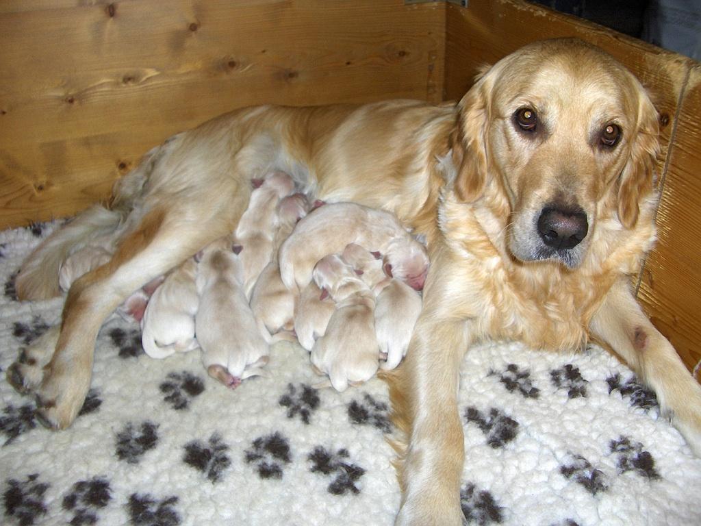 Puppy's van Krispy
