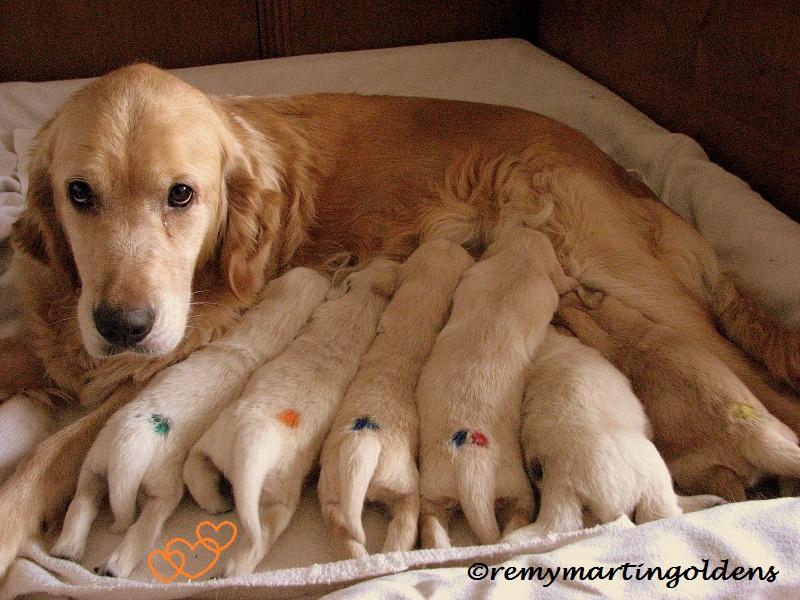 2016-03-19 puppys 1