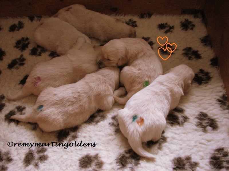 2016-03-19 puppys 2