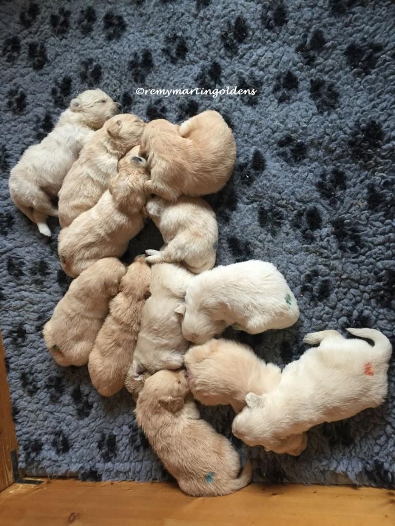2016-03-20 puppys 4