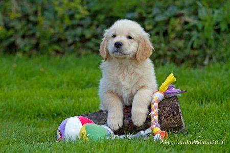 Puppy's Ilyssa