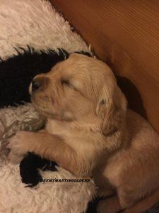 fotos van de puppys